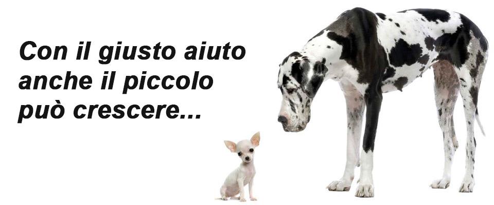 Marco Barbera come far crescere il piccolo business